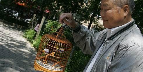 (61) Vogels uitlaten