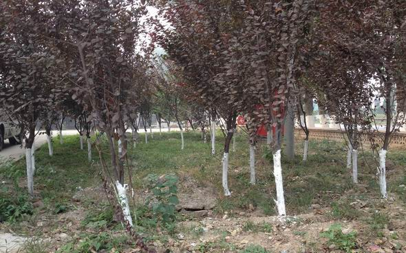 (70) Witte bomen-2